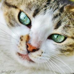 ~~ Les deux Émeraudes ~~ (Joélisa) Tags: juillet2019 charlotte yeux eyes vert green regard fabuleuse