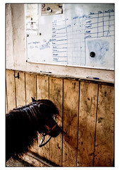 (schlomo jawotnik) Tags: 2019 juni kleinflöthe ponyhof reiterhof stall pony infotafel mähne analog film kodakproimage100 usw