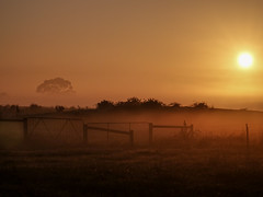 Misty Morning (Thunder1203) Tags: botanicridge sonyrx10m4 victoria mistfog sunrise mist fog frost earlymorning