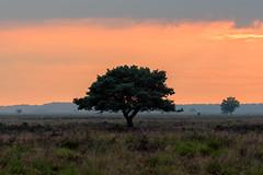 Een ommetje maken (Pieter ( PPoot )) Tags: ommetje zonsondergang samen npdwingelderveld