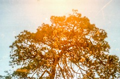 On how to give things a twist (lunacornata) Tags: 35mm film filmisalive keepfilmalive kodak analog analogue analogica analogico analoga analogo landscape trees tree nature naturescape
