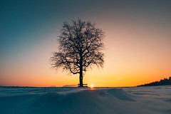 Moody sunset (Rene Wieland) Tags: sunset tree scheibbs mostviertel niederösterreich winter cold frozen snow schnee landschaft baum moody sonnenuntergang canonm loweraustria österreich nature natur landscape