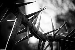 horror.fence (fhenkemeyer) Tags: horror abstract netherlands rotterdam hff fence