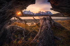 Patagonia Trees (albert dros) Tags: torresdelpaine chile patagonia trees sunset travel albertdros southamerica