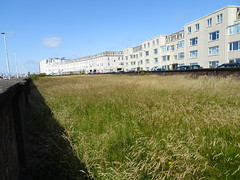 Meadow of long grass on South Promenade, Blackpool (j.a.sanderson) Tags: meadow long grass southpromenade blackpool grasses