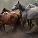 chasin' wild horses - persiguiendo caballos salvajes, relato