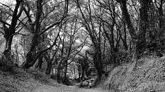 Por ese bosque abrumador (Gabriel Navarro Carretero) Tags: bosque forest sendero path pathway peregrinos pilgrim caminodesantiago caminantes