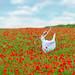 Poppies # 02
