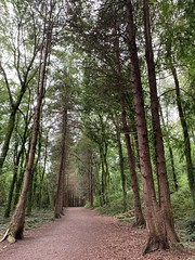 If You Go Down To The Woods Today - Rockmount Wood (firehouse.ie) Tags: wood trees ireland tree nature rural forest countryside woods arbres arbre forestry forests