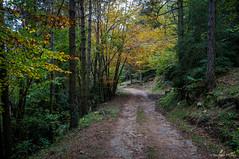 Por aquí no era (SantiMB.Photos) Tags: 2blog 2tumblr 2ig lanoudeberguedà catllaràs berguedà otoño autumn bosque forest camino way path sendero geo:lat=4219120129 geo:lon=192549080 geotagged castelldelareny cataluna españa