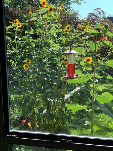 Where are the humming birds?