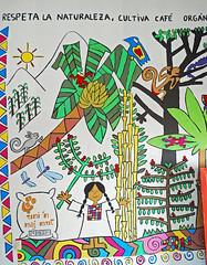 C&D10 (PuraVida Photo) Tags: majomut development womenshealth internationaldevelopment indigenous indigenouswoman grassrootsdevelopment film kodachrome rxiintnamet environment culture coffee mexico interamericanfoundation