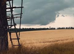 DF-IMG_0040 (Daniel Frühauf) Tags: tree ladder danielfruhauf df canon eos canoneos canoneosm zoner zonerx zonerphotostudio 22mm 50mm 55mm 75mm 150mm 15mm 300mm