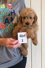 Holly Girl 1 6-8