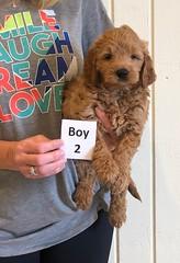 Holly Boy 2 pic 3 6-8