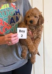 Holly Boy 2 6-8