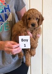 Holly Boy 1 pic 3 6-8