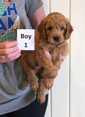 Holly Boy 1 pic 2 6-8