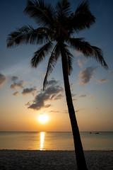Zanzibar (Markus Hill) Tags: zanzibarnorth tansania zanzibar sansibar africa travel canon 2019 sunset sun sky palm tree palme strand beach evening clouds