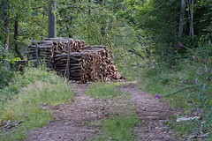 Wood Stack (Gerald Lang) Tags: sonyalpha7ii sonya7ii wald schwarzwald forest weg blackforest forêtnoire forêt sonyilce7m2 holz wood bois chemin lane import12072019 aruba