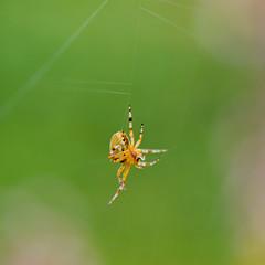 DSC_5399-1 (annebibi_1) Tags: araignées