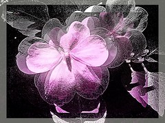 Flor Plateada (Marcia Portess-Thanks for a million+ views.) Tags: pink flower art fleur photomanipulation silver effects map flor blossoms digitalart rosa photoart pinksilver plateada elarte silveryflower florplateada elartedigital marciaportess marciaaportess originalart