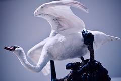 Skeleton and Swan (claudia 222) Tags: hermitage amsterdam artist bugs swan blue noctilux 50mm f095 janfabre stupiditystandingondeath stuffed jewelbeetlewingcases art museum