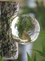 Looking Glass (Capella Silverangel) Tags: nature garden glass looking alice wonderland topsy turvy crystal ball seeing smooth surface rough brick background foreground contrast detail globe form shape sphere spherical abstract masonry