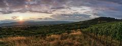 Summer in the vineyards (Parchman Kid (Jerry)) Tags: summer vineyards sunset evening clouds parchmankid sony a6000 gensingen bingen rheinlandpfalz jerryburchfield burchfield