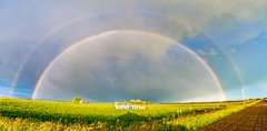 Glory of nature (Christy Turner Photography) Tags: canola rainbow storm stormchaser rainbows weather abstorm wx nature beautiful