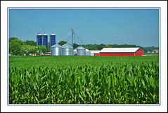 The Corn is Tall in Indiana's Amish Country (sjb4photos) Tags: indiana indianaamishcountry farm redbarn