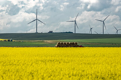 Transporting hay bales through the canola fields (deirdre.lyttle) Tags: alberta canolafields clouds windturbines haybales redtruck