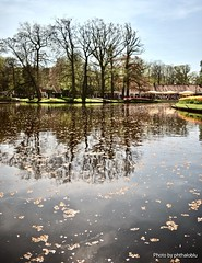 Glimmer (phthaloblu) Tags: keukenhofgardens canal amsterdam netherlands water leaves trees tents sky