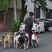 Dog Walker - La Condesa, Mexico City