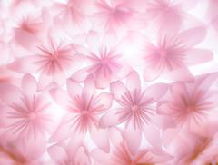 Lampshade made of paper (Tomo M) Tags: smileonsaturday picofpaper light lamp japanese bright flower papaer handmade macro