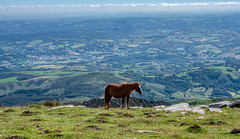 Local horse on top of La Rhune.jpg (tjmic_92) Tags: france larhune paysbasque