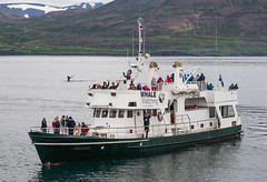 I also dive again. To holiday of Borkum. (Zoom58.9) Tags: seascape ocean water ship people whale expedition europe iceland akureyri seelandschaft meer wasser schiff menschen leute wal europa island