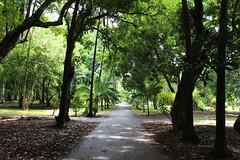 Forest Walk (Rckr88) Tags: pamplemousses mauritius forest walk forestforest walkwalkway walkway walks walking pathway path greenery green grass garden gardens botanical botanicalgardens botanicalgarden botany nature naturalworld outdoors travel travelling