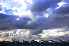 Westland (ulbespaans) Tags: westland horticulture agriculture glasshouse glasshouses horticultura horticultural sky clouds cloudy dramaticsky dramatic weather weatherphotos weatherchannel stormclouds meteo storm rainyday rain
