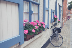 House with Flowers and a Bike Outside in Bruges, Belgium. (iesphotography) Tags: 2019 5d3 belgium bruges brussels canon citybreak eu europe european eurostardestination flanders holiday photography travel vacation bike house flowers