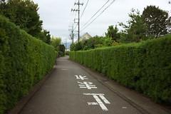 oi#11 (tetsuo5) Tags: 足柄上郡 大井町 ashigarakamigun oimachi eos5dmarkⅱ ef40mmf28stm