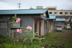 oi#12 (tetsuo5) Tags: 足柄上郡 大井町 ashigarakamigun oimachi eos5dmarkⅱ ef40mmf28stm
