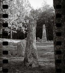 The graveyard Istrehågan (Geir Bakken) Tags: grave stone stonecircle istrehågan larvik viking yashica yashica44 blackandwhite bw fomapan200 film filmisnotdead filmphotography filmcamera filmisalive sprocket analog analogue analogphotography vintagecamera ancient norway