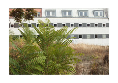 Ever Growing (Thomas Listl) Tags: thomaslistl color plant nature green leaves architecture building facade mundane trist würzburg windows field topography banal tristesse 50mm