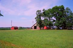 Farmyard in the Sun (stephen.michaels) Tags: canoneos55 canonef28135mmf3556isusm barn cow holsteins trees clouds farming farm agriculture grass kodakektar100