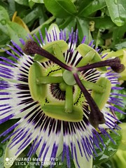 #flower #flowerpower #flowerphotography #flowerlover #flower_daily #flower_perfection #macroflowershot #macrophotography #macro #photography #shot #mate20pro #mate20prophoto #mate20pro_camera #Huaweimate20Pro #huaweiphoto #huawei_pic #huaweishot #huaweiph (kadafione1234) Tags: macro mate20prophoto macroflowershot flowerpower flowerphotography flowerdaily huaweishot flower shot mate20procamera huaweipic huaweiphotographers huawei flowerlover mate20pro macrophotography flowerperfection huaweiphoto huaweimate20pro photography