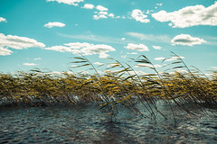 La Valse d'Amélie. (A.Koponen) Tags: canon eosr rf24105mmf40 hoya suomi summer sunlight sky cloud clouds kuopio finland lake lseries straws lazydays amélie