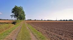 36100 (benbobjr) Tags: lincoln lincolnshire midlands eastmidlands england english uk unitedkingdom gb greatbritain britain british thorntoncurtis roughton eastlindsey easthalton northgarth yorkshireandthehumber immingham humberside killingholme path pathway footpath bridleway publicfootpath easthaltonroad chasehillroad