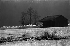 in den Filzen (jo.sa.) Tags: landschaft lebensraum gegenlicht analog analogefotografie hütte bw sw schwarzweiss schwarzweissfotografie