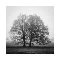 Geschwister, Gross Aschen, 2018 (roemart) Tags: landschaft landschafts landscape minimalismus minimal stillleben stilleben still stills stillife baum bäume trees
